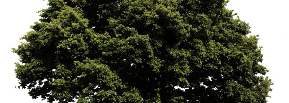 green-identity-campani